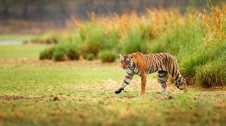 Sariska Wildlife Sanctuary