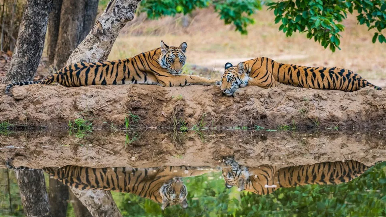 Jabalpur to Bandhavgarh