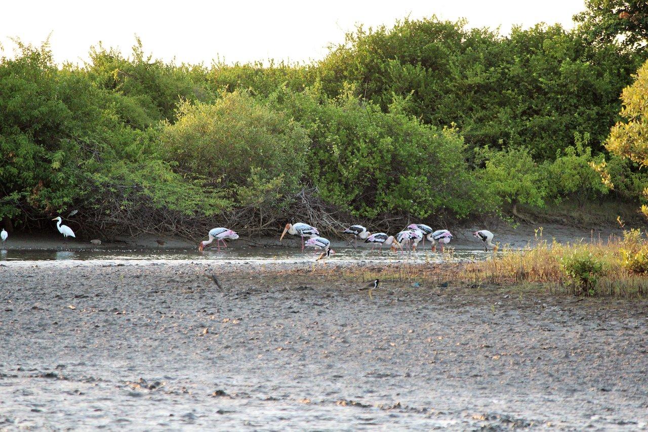 Kodikkarai Wildlife Sanctuary
