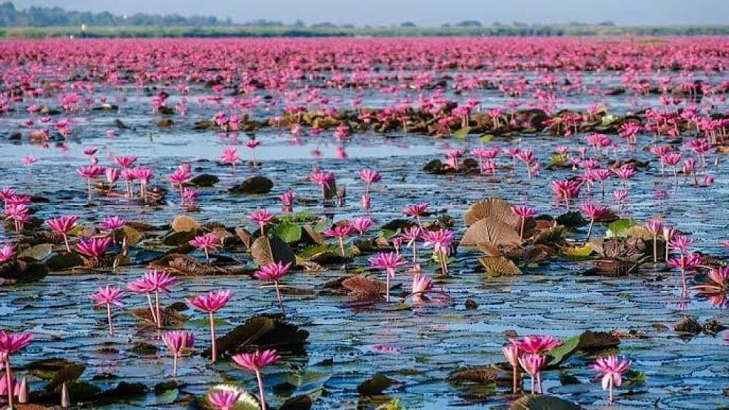 Lotus Lake, Indore